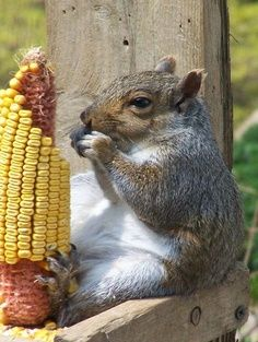 :) Fat squirrel.