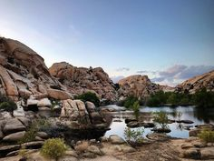 : Joshua Tree National Park   The 1.2 mile loop trail to Barker Dam is one of the best and most used short paths in Joshua Tree National Park encountering a variety of interesting scenery: open flats granite boulders a seasonal reservoir a cliff bearing Indian petroglyphs and many species of desert plants including plenty of Joshua trees.  : @nataliageographic Joshua Tree National Park, National Parks, Places To Travel, Places To Visit, Route 66 Road Trip, Desert Plants, Beautiful Places In The World, Cliff, Palm Springs