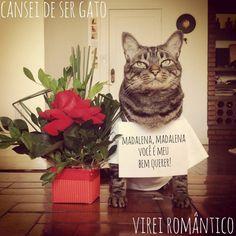 Cansei de ser gato, virei romântico - 5 bichinhos de estimação que conquistaram nosso coração
