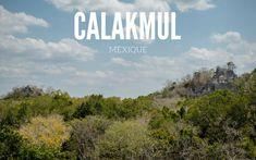 Calakmul, la cité Maya qui vaut le détour