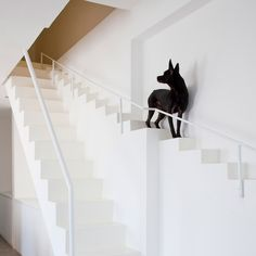This house in Ho Chi Minh City was renovated to include a special staircase for the owners' dogs, which features narrower treads and shorter rises than human stairs to make it more suited to canine strides.