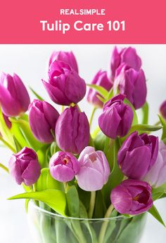 Tulip Care 101 | Tips for when they're in the ground, potted, or displayed in a vase.