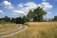 Sommer am Rotenberg Country Roads, Tsg 1899 Hoffenheim
