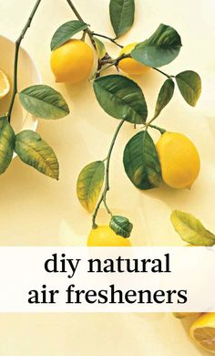 DIY Natural Air Fresheners: So Fresh and So Clean | Martha Stewart Living - Does anybody really want their home to smell like vanilla? Ok, so having your living room smell like a fresh baked pie is not such a bad thing -- that is, if it's coming from a real apple pie. Otherwise, all those store-bought air fresheners just smell artificial.