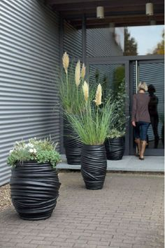 Not those plants but for the concept Fleur--great containers!!