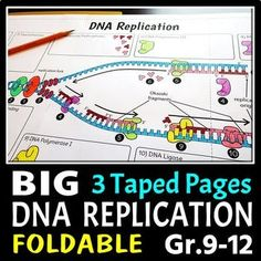 DNA Replication Foldable - Big Foldable for Interactive Notebooks or Binders Ap Biology, Teaching Biology, Study Biology, Cell Biology, Molecular Biology, Science Biology, Life Science, Computer Science, Dna