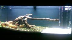 My First real aquascape Follow progress http://www.fishlore.com/fishforum/freshwater-aquarium-builds/180075-my-first-aquascape-240l-fluval-roma.html