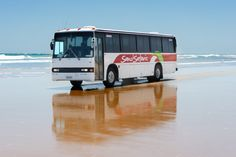 Best day trip by bus with Sand Safaris from Kaitaia suitable for all ages, Sand Tobboggan Te Paki sand dunes & beaches. Safari Bus, Bus Trips, Bus Travel, Day Tours, Pure White, Sands, Day Trip, Lighthouse, New Zealand