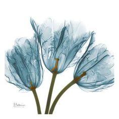 Tulips in Blue Art Print by Albert Koetsier at Art.com Blue Framed Art, Blue Art, Framed Wall Art, Framed Art Prints, Purple Art, Transparent Flowers, Blue Poster, Alcohol Ink Art, Botanical Art