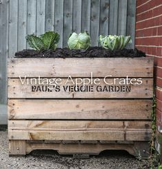 New use for our Bulk Bins - personalised veggie garden! Garden Bar, Veg Garden, Garden Boxes, Garden Ideas, Apple Boxes, Apple Crates, Raised Vegetable Gardens, Raised Garden Beds, Wooden Crates For Sale