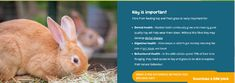 The Excel Feeding Plan with Dr Suzanne Moyes - watch video (link) Rabbit Diet, Video Link, Dental Health, Watch Video, How To Plan, Oral Health