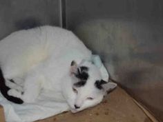 Romeo is safe!! 💋 Invisible!  Not seen by public! 7 YEARS OLD, NEEDS OUT NOW!!!!  A1096311