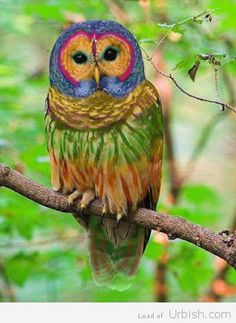 Rainbow Owl; this is so beautiful!  I would love to see it in person.