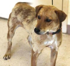 (69) Euthanizing Many Dogs on Monday August 5th - Henry County, GA