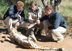 Prince Harry Photos - Prince William And Harry Visit Botswana - Day 3 - Zimbio