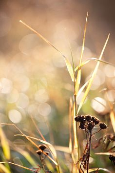 The simple beauty of field grass <3