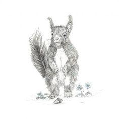 SQUIRREL! Giclee print – Naomi Watkins Art