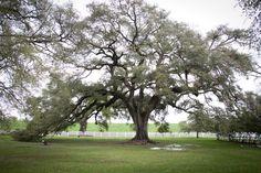 A southern tree located at Louisiana on a plantation. (photo: Dalissa)