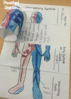 Teaching the Body Systems! Circulatory System freebie!