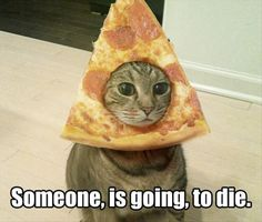 Funny pictures about Magnificent Pizza Cat. Oh, and cool pics about Magnificent Pizza Cat. Also, Magnificent Pizza Cat photos. Funny Animal Pictures, Funny Animals, Cute Animals, Animals Dog, Funny Cats And Dogs, Cats And Kittens, Derpy Cats, Crazy Cat Lady, Crazy Cats