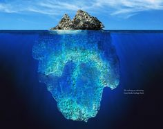 The Great Pacific Garbage Patch. It's huge. And it's horrible.