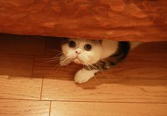 A cat named Makoto