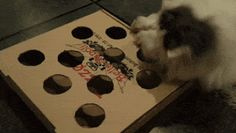 Ce jouet à fabriquer soi-même est tout simple.  Il suffit de faire des trous sur une boite à pizza et de mettre une balle de ping-pong dedans.  Découvrez l'astuce ici : http://www.comment-economiser.fr/jouet-pour-chat-pas-cher-gratuit.html