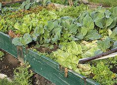 Tout savoir sur la rotation des légumes au potager.