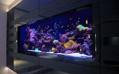 Simple room Wall Aquarium, Home Aquarium, Aquarium Design, Marine Aquarium, Reef Aquarium, Aquarium Fish Tank, Cool Fish Tanks, Saltwater Fish Tanks, Saltwater Aquarium