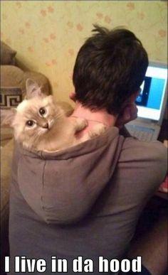 Ghetto cat