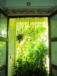 Minhas ENORMES janelas com muito verde ao redor