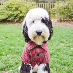 """Who Wore It Best: The Cat, The Dog Or The Rabbit? #refinery29  http://www.refinery29.uk/dress-up-puppy-pets-instagram#slide-6  """"Being perfectly well-dressed gives one a tranquility that no religion can bestow."""" Ralph Waldo Emerson..."""
