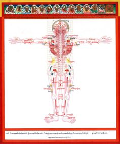 15. Vulnerable Points   - Posterior view -