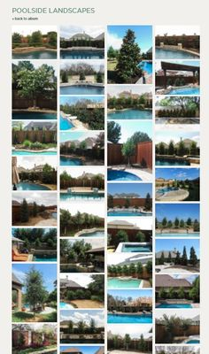 View our poolside landscape installation pictures and landscape designs of trees that we have planted throughout the Dallas Ft. Trees And Shrubs, Trees To Plant, Plants Around Pool, Dallas, Nursery Modern, Tree Care, Fence Landscaping, Growing Tree, Nursery Design