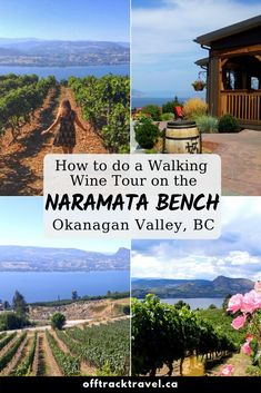 The Naramata Bench is home to the highest concentration of wineries in BC. Here's all of the details of our budget walking wine tour of the area! Cool Places To Visit, Places To Travel, Places To Go, Tourism Victoria, British Columbia, Columbia Travel, Canadian Travel, Visit Canada, Adventure Activities