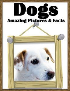 Dogs: Amazing Pictures and Facts about Dogs! ( With Cute Photos for Kids! ) children book, sweet pictures, dog pictures ( dog book, dog ebook, dogs pictures, dog facts)  BUY NOW        Amazing Pictures and Facts about Dogs! ( With Cute Photos for Kids! )      kids book, dog book, kids funny, dog pictures, cute dogs  http://funnymemes.site/dogs-amazing-pictures-and-facts-about-dogs-with-cute-photos-for-kids-children-book-sweet-pictures-dog-pictures-dog-book-dog-ebook-dogs-pictures-d..