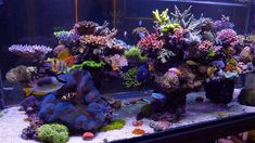 Saltwater Aquarium Fish, Saltwater Tank, Reef Aquarium, Marine Tank, Marine Fish, Reptile Cage, Reptile Enclosure, Aquascaping, Sps Coral