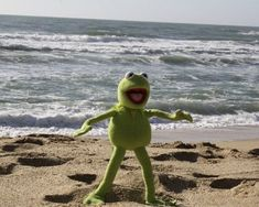 Funny Profile Pictures, Reaction Pictures, Funny Pictures, Sapo Kermit, Frog Wallpaper, Kermit The Frog, Cute Frogs, Jim Henson, Meme Faces
