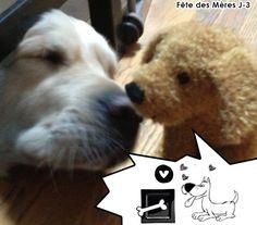 Traduisez les paroles de la peluche Victor au chien Funky !