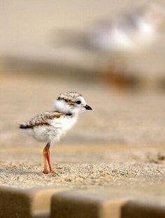 صورة رائعة لصغير #النورس.  A baby #Seagull