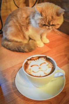 Cats would be the worst baristas ever. Here's my latest on Catster. Funny Animal Memes, Funny Cat Videos, Funny Animals, Cute Animals, Funny Cats, Kittens And Puppies, Cats And Kittens, Beautiful Cats, Animals Beautiful