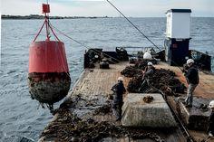 Une journée au large de Plouguerneau, à bord du baliseur L'Armorique. Un reportage publié dans le Bretagne Magazine actuellement en kiosque. Photo Simon Cohen