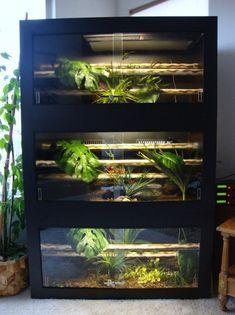 x x (open front) - Quick Assembly Reptile Cage, Reptile Habitat, Reptile House, Reptile Room, Snake Cages, Bearded Dragon Enclosure, Snake Enclosure, Terrarium Reptile, Les Reptiles