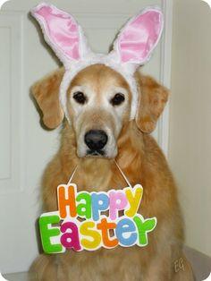 My boy, Forrest, wants to wish everyone a 'Happy Easter!'    (Photo credit: Elizabeth Gaudreau)