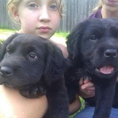 """James and John, """"Sons of Thunder"""". These two Newfoundland puppies were found abandoned and dumped on the side of the road next to a busy highway. Friends found them, picked them up, called us, and here we are, proud new owners of 2 Newfoundland puppies! Though, we found out after we adopted them they were Newfoundlands. We didn't realize what they were and thought them to be Black Labs... as the vet put it. You have found yourselves a great treasure. Ah. Indeed we have. Thank you Lord! <3"""