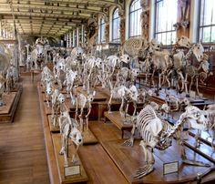La Galerie de paléontologie et d'anatomie comparée en Paris.