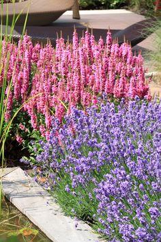 Combinatie Lavendel en Kattenstaart (Lythrum)