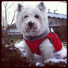 Another snow dog!!!
