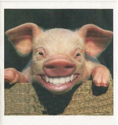 I love little pigs but this is just plain creepy!