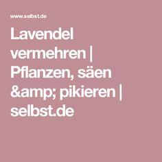 Lavendel vermehren | Pflanzen, säen & pikieren | selbst.de